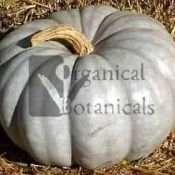 Blue Jarrahdale Pumpkin