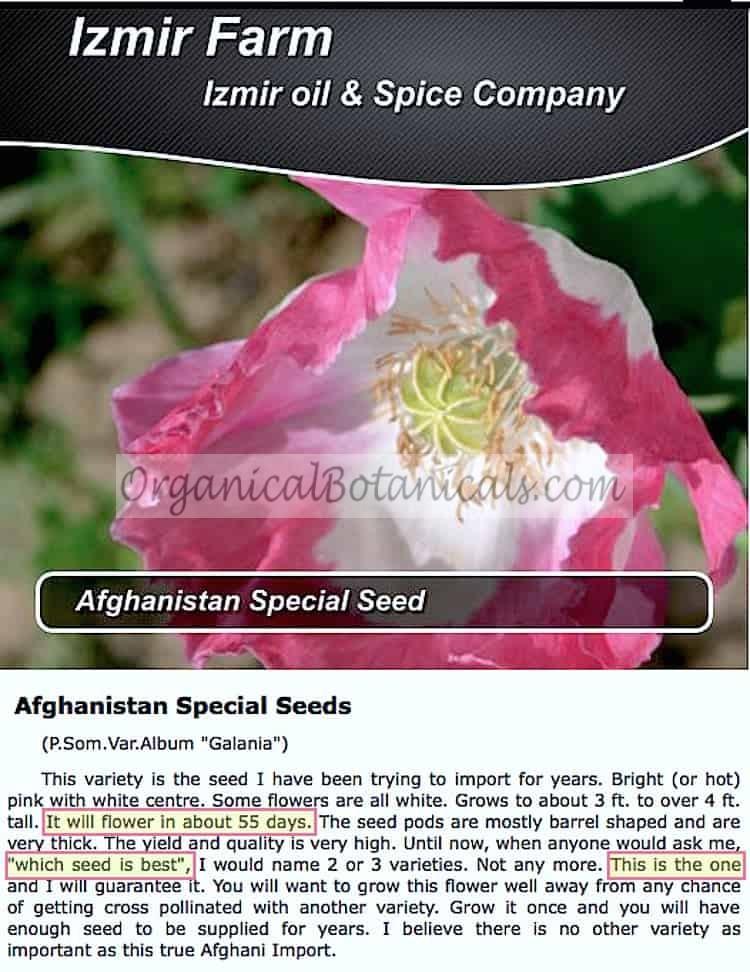 Izmir Afghan Oil and Spice Farm New Papaver Somniferum Super Poppy Seed Strain
