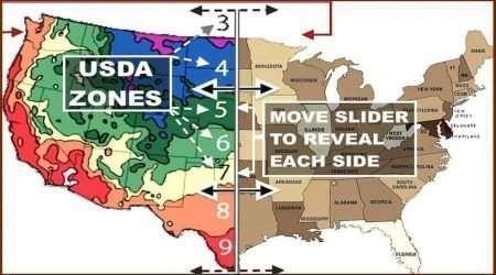 USDA Zones Map