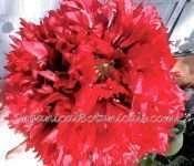 Red Peony PAPAVER SOMNIFERUM POPPY