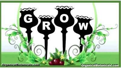 GROW Papapver Somniferum Poppy Seeds - Organical Botanicals